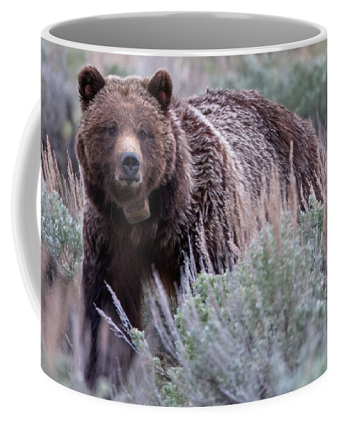 Grizzly Coffee Mug featuring the photograph Mama Grizzly by Natural Focal Point Photography