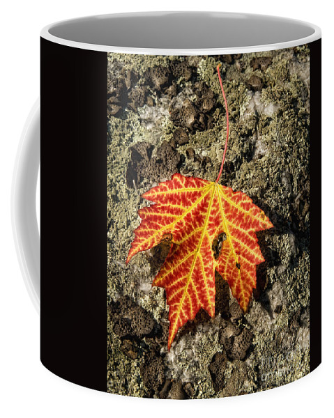 Fall Coffee Mug featuring the photograph Maple Leaf by Claudia Kuhn