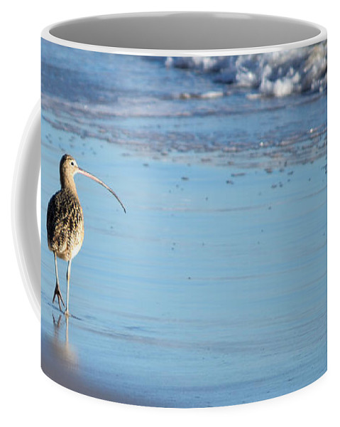Marbled Godwit Coffee Mug featuring the photograph Marbled Godwit by Charlene Gauld