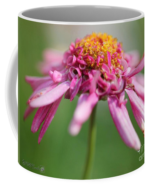 Mccombie Coffee Mug featuring the photograph Marguerite Daisy Named Summer Song Rose by J McCombie