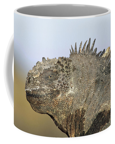 Feb0514 Coffee Mug featuring the photograph Marine Iguana Male Santa Cruz Island by Tui De Roy