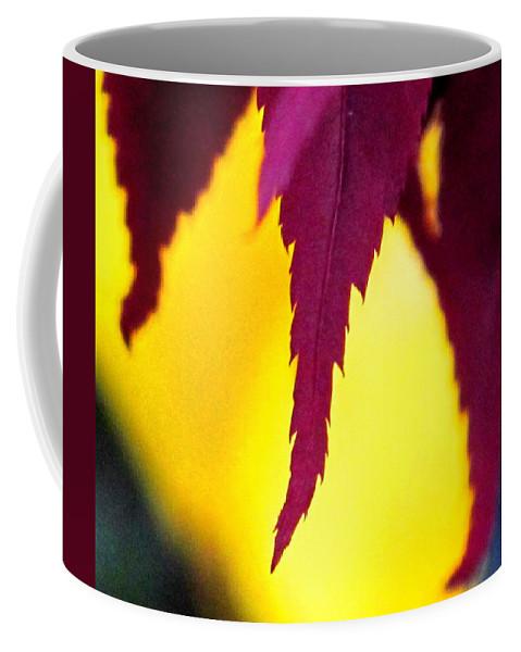 Maroon Coffee Mug featuring the photograph Maroon And Yellow by Ian MacDonald
