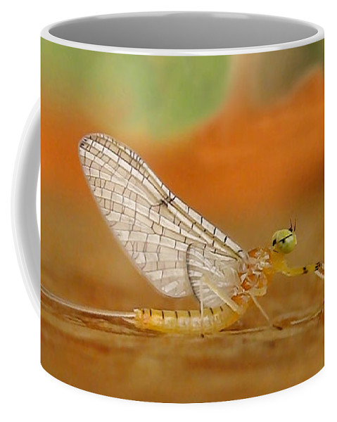 Mayfly Coffee Mug featuring the photograph Mayfly Art by Thomas Young