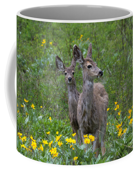 Deer Coffee Mug featuring the photograph Meadow Meal by Mike Dawson