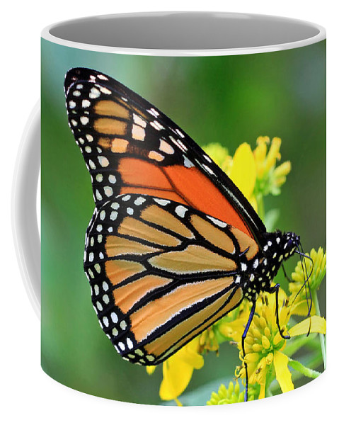 Butterflies Coffee Mug featuring the photograph Meadow Monarch by Geoff Crego