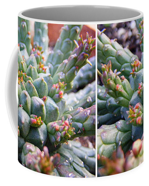 Stereo Coffee Mug featuring the photograph Medusa Succulent In Stereo by Duane McCullough
