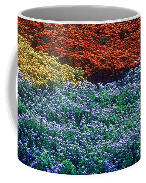 Flowers Coffee Mug featuring the photograph Merging Colors by Rodney Lee Williams