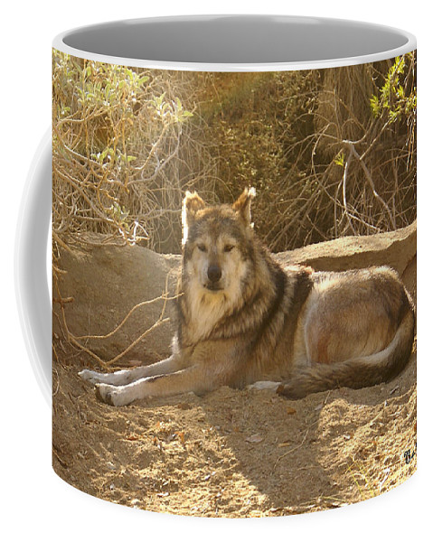 Mexican Wolf Coffee Mug featuring the digital art Mexican Wolf Close Up by Barbara Snyder