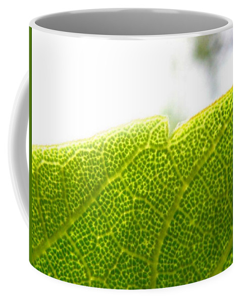 Leaf Coffee Mug featuring the photograph Micro Leaf by Rhonda Barrett