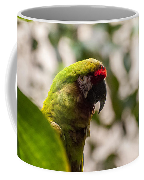 Military Macaw Coffee Mug featuring the photograph Military Macaw by Bianca Nadeau