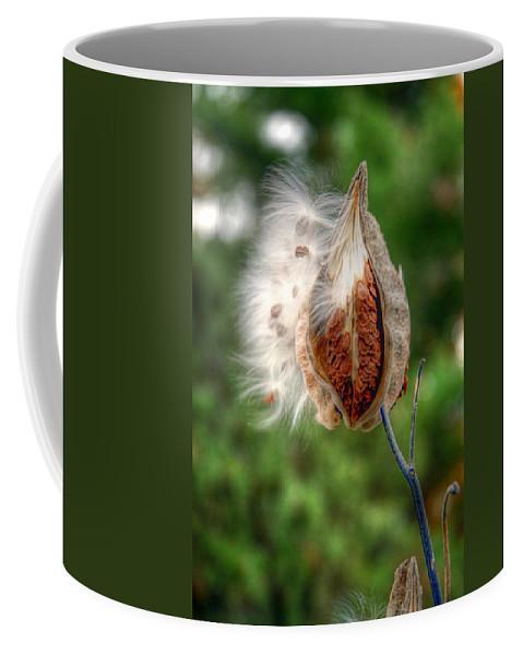 Milkweed Coffee Mug featuring the photograph Milkweed by Linda Covino