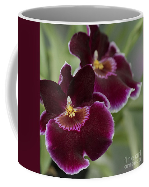 Dark Red Orchid Coffee Mug featuring the photograph Miltoniopsis Rouge 'california Plum' Macro 2692 by Terri Winkler