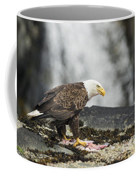 Eagle Coffee Mug featuring the photograph Mine by Ted Raynor