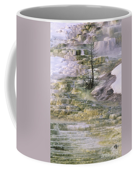 North America Coffee Mug featuring the photograph Minerva Springs Terraces Yellowstone National Park by Dave Welling