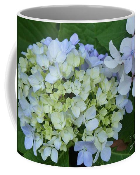 Hydrangea Coffee Mug featuring the photograph Mini Blue Hydrangea by Jacqueline Russell