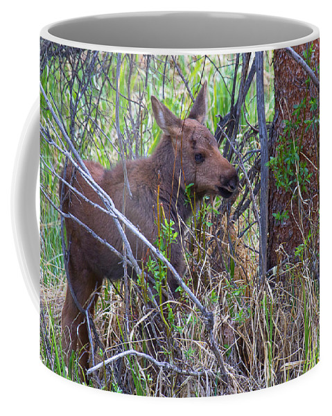 Moose Photograph Coffee Mug featuring the photograph Mini Moose by Jim Garrison