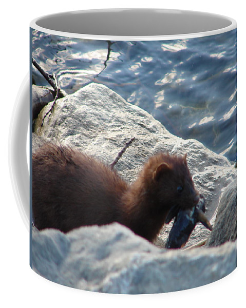 American Mink Coffee Mug featuring the photograph Mink With A Round Goby by Randy J Heath
