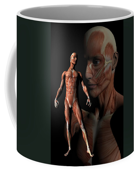 Chiropractor Coffee Mug featuring the digital art Misc. Anatomy Images by Joseph Ventura
