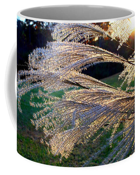 Miscanthus Coffee Mug featuring the photograph Miscanthus by Kathryn Meyer