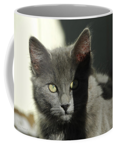 Cat Coffee Mug featuring the photograph Mischief by Donna Blackhall