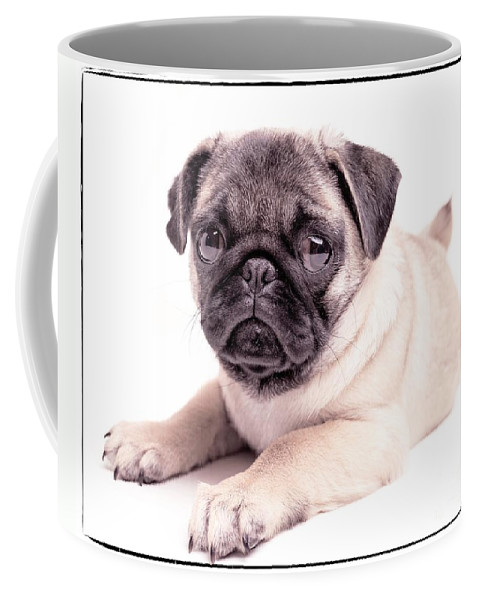 Pug Coffee Mug featuring the photograph Miss You by Edward Fielding
