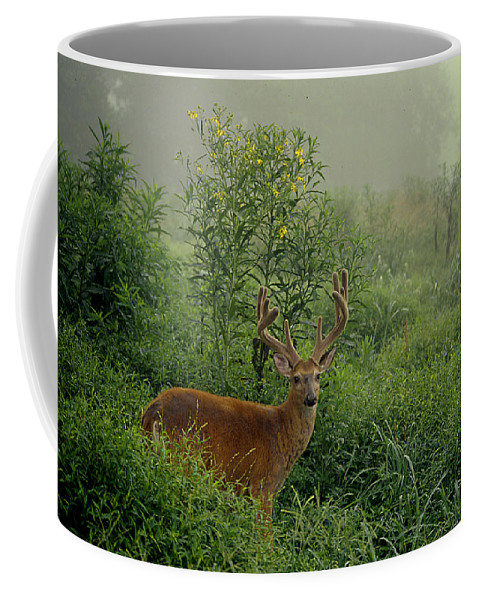 Deer Coffee Mug featuring the photograph Misty Morning Deer by Eric Albright