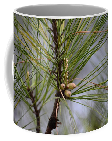 Misty Pines In Spring 2013 Coffee Mug featuring the photograph Misty Pines In Spring 2013 by Maria Urso