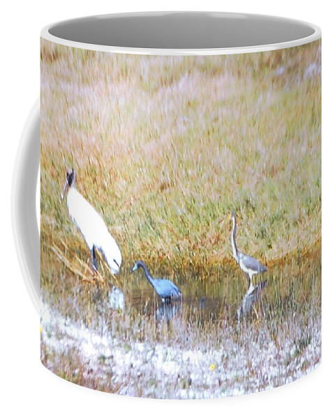North Ft.myers Coffee Mug featuring the photograph Mixed Shore Birds by Robert Floyd