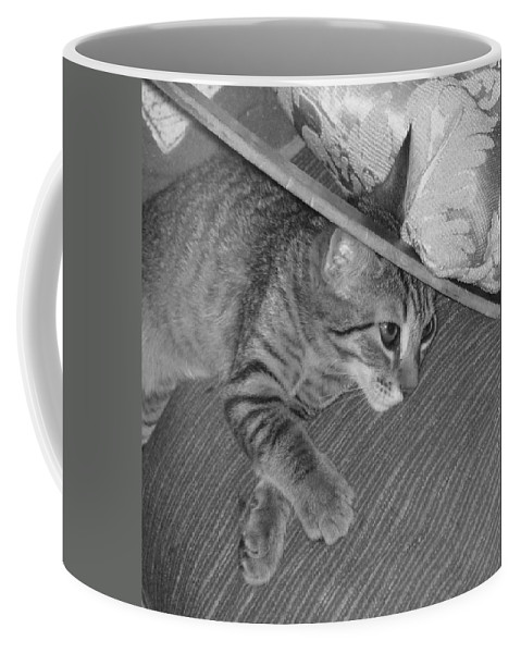 Kitten Coffee Mug featuring the photograph Model Kitten by Pharris Art