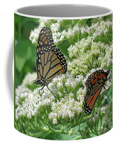 Butterfly Coffee Mug featuring the photograph Monarch Butterfly 56 by Pamela Critchlow