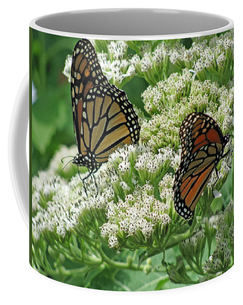 Butterfly Coffee Mug featuring the photograph Monarch Butterfly 57 by Pamela Critchlow