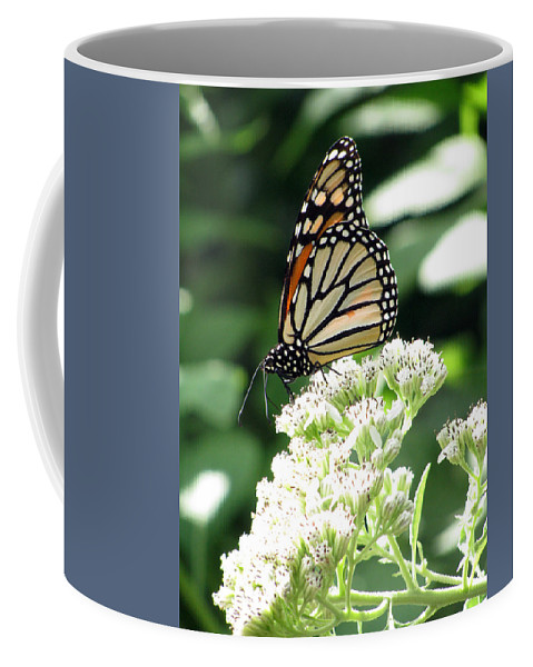 Butterfly Coffee Mug featuring the photograph Monarch Butterfly 58 by Pamela Critchlow