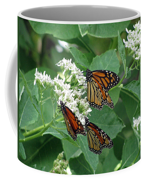 Butterfly Coffee Mug featuring the photograph Monarch Butterfly 63 by Pamela Critchlow