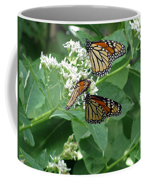 Butterfly Coffee Mug featuring the photograph Monarch Butterfly 66 by Pamela Critchlow