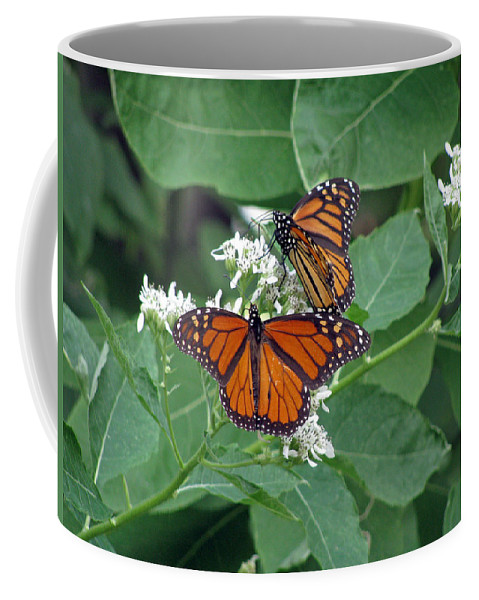 Butterfly Coffee Mug featuring the photograph Monarch Butterfly 68 by Pamela Critchlow