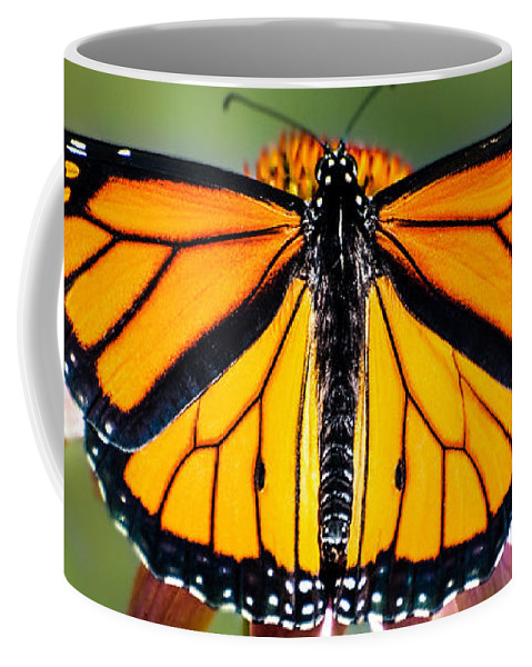 Monarch Butterfly Coffee Mug featuring the photograph Monarch Butterfly by Bob Orsillo
