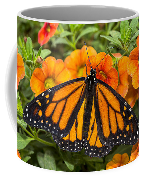 Monarch Coffee Mug featuring the photograph Monarch Resting by Garry Gay