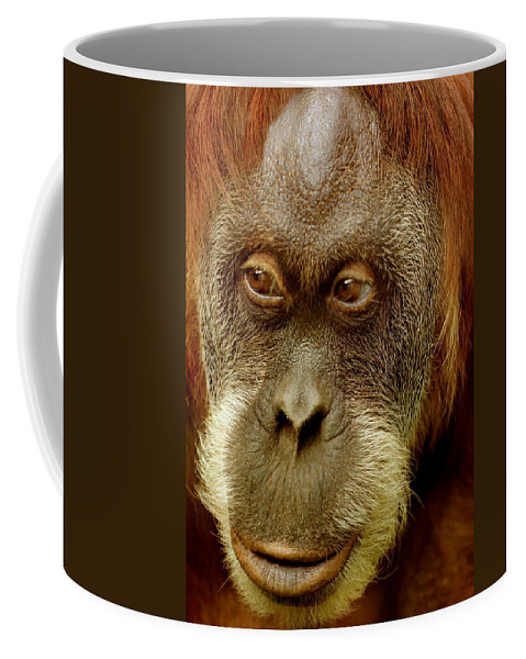 Animal Coffee Mug featuring the photograph Monkey by Heike Hultsch