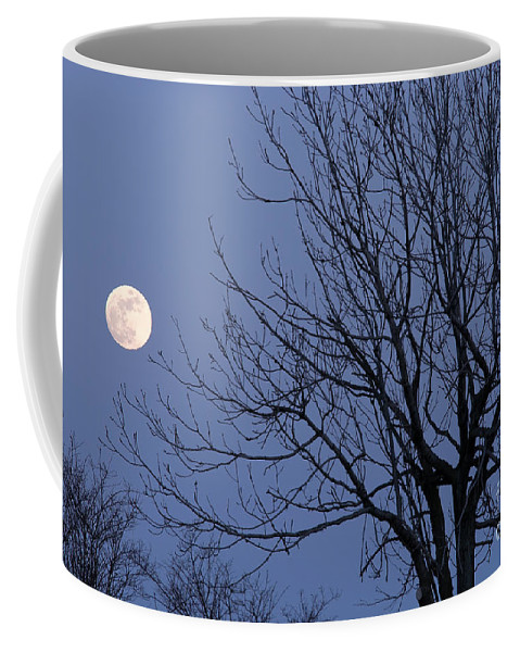 Moon Coffee Mug featuring the photograph Moon And Bare Tree by Michal Boubin