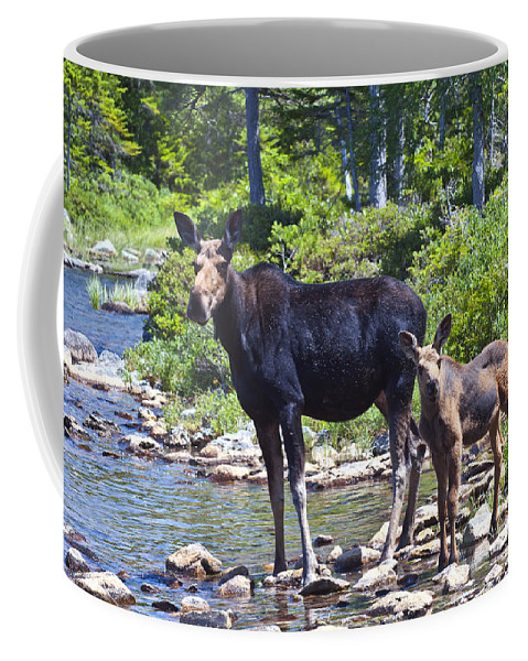 Moose Coffee Mug featuring the photograph Moose And Baby 4 by Glenn Gordon