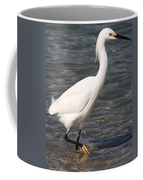Bird Coffee Mug featuring the photograph Morning Fish Hunt by Bruce Bley