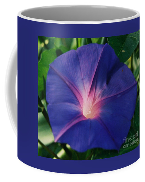 Morning Glory Art Floral Honoring Georgia O'keefe Macro Stock Shot Purple Flower Sunlit White Heart Bermuda Greenery Mauve Colored Veins Natural Beauty Tropical Flora Weed To Some Canvas Print Metal Frame Poster Print Available On Greeting Cards Phone Cases Throw Pillows Tote Bags Shower Curtains Mugs Pouches Weekender Tote Bags And T Shirts Coffee Mug featuring the photograph Morning Glory In Bermuda # 1 by Marcus Dagan