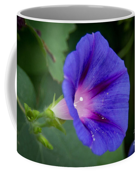 Morning Coffee Mug featuring the photograph Morning Glory by Scott Hervieux