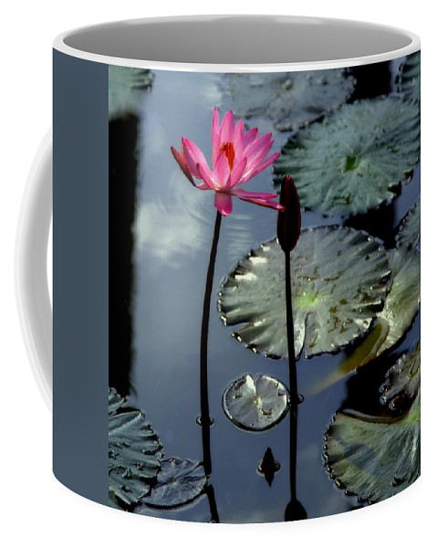 Water Lilly Coffee Mug featuring the photograph Morning Light by Karen Wiles