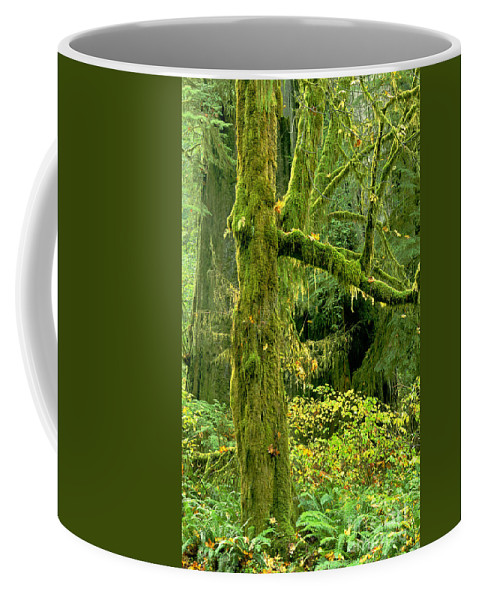 Big Leaf Maple Coffee Mug featuring the photograph Moss Draped Big Leaf Maple California by Dave Welling