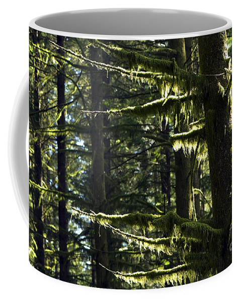 Moss Coffee Mug featuring the photograph Moss by Sharon Talson