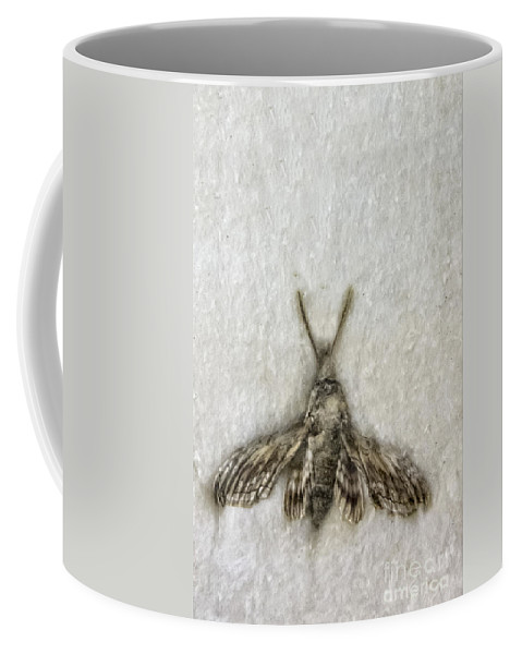 Moth Coffee Mug featuring the photograph Moth by Margie Hurwich