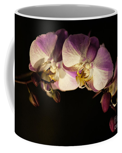 Moth Orchids Coffee Mug featuring the photograph Moth Orchids by Emma England