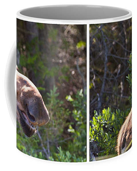 Moose Coffee Mug featuring the photograph Mother And Baby Moose by Glenn Gordon