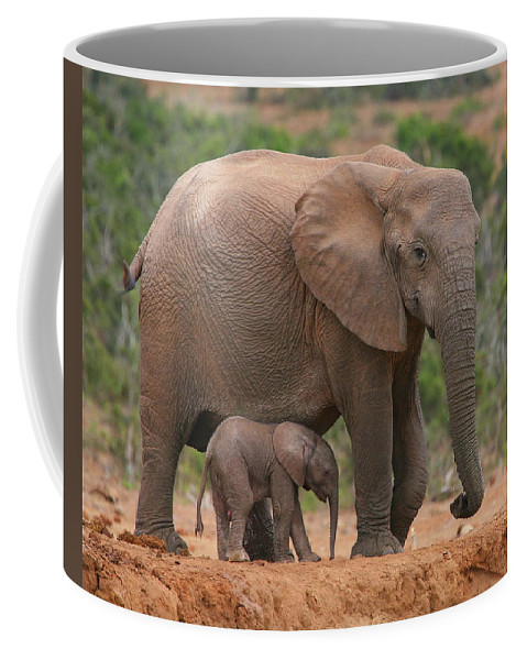 Elephant Coffee Mug featuring the photograph Mother And Calf by Bruce J Robinson